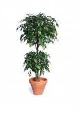 Artificial Ficus Tree Two Head 180cmH
