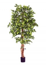Artificial Ficus Tree H180cm